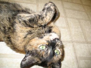 Jessie Cat-on back