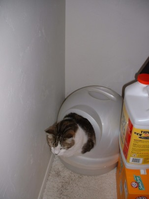 Litter box and cat
