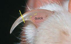 Cutting Cat's Toenails